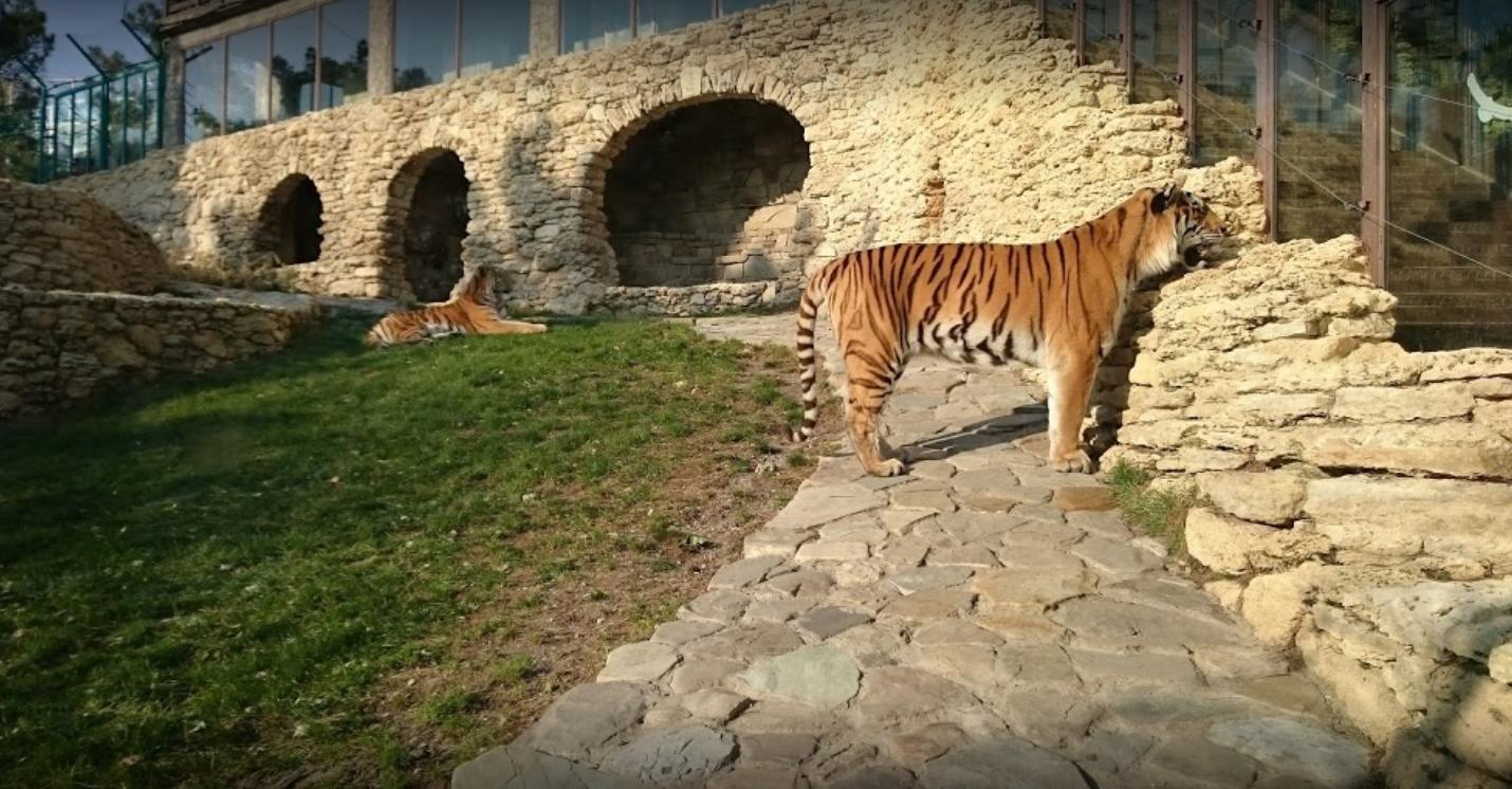 Сафари парк Геленджик
